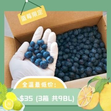 出口超大蓝莓 3箱(9bl)